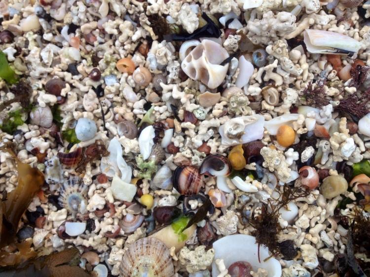 Sand at Coral Beach