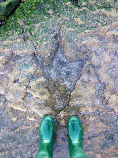 Looking down at 165 million years.  (The erosion between the three toes makes this look even more cartoonish!)