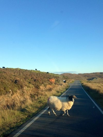 Rush hour in Kilmaluag
