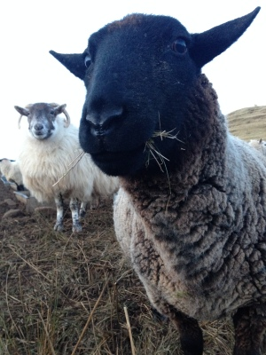 What ewe lookin' at?